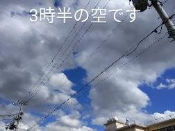 大ばあばは朝から又転んだようです。だんごは大阪のおっちゃんに、やさしく怒られました。笑