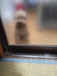 プー子、久しぶりに奥の部屋に入れられる。