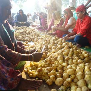 【10万食の無料食堂を手伝う】聖地アムリトサルでインド人と聖水を配る旅