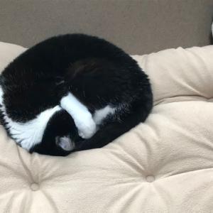 猫が抱えるトラウマと、この3か月の目標