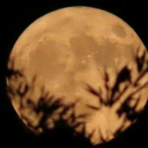 ★☆満月撮りました1☆★