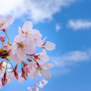 四月に使われる銘 茶杓・茶入・茶碗の銘 歳時記