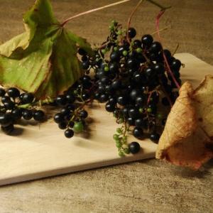 ヤマブドウ【山菜の採り方】
