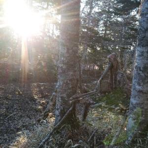 越冬野営ナチュラルシェルター(暖房付き)冬の森編【野営】