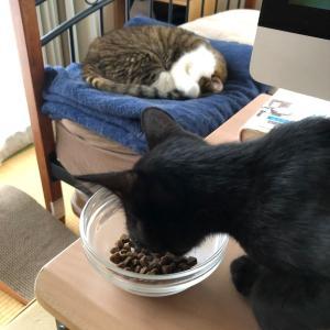 食事する子猫と寝ているツブ