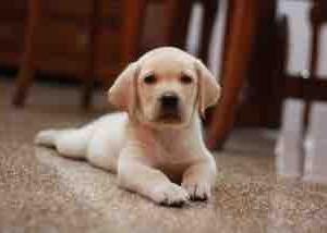 犬に暴力、動画が炎上 動物愛護法違反容疑で飼い主の男を書類送検