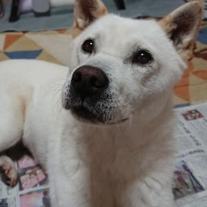 日本犬と暮らしたい方へ