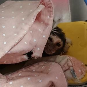 負け組の猿