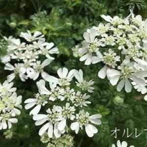 日曜日の事♪競馬G1天皇賞(春)