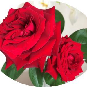 紅白の花♪乗馬レッスン