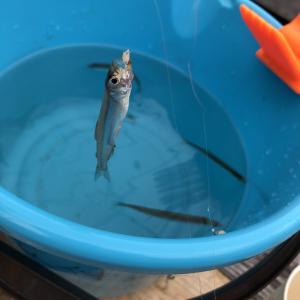兵庫県でもワカサギが釣れる!冬は佐仲ダムでワカサギを釣ろう!
