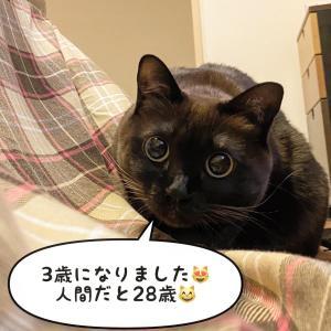 お誕生日!トンちゃんが3歳になりました!!!