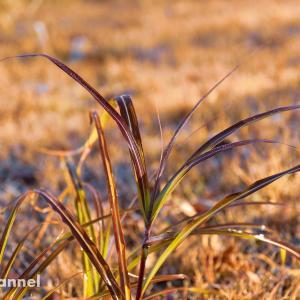 被写体は冬の雑草201812-2