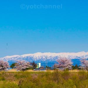 車窓からの桜と飯豊201904