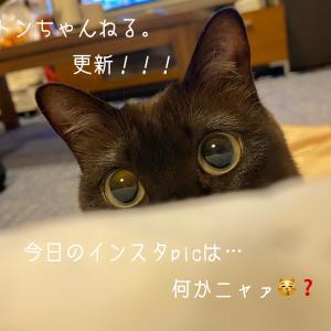 『とある日のトンちゃん』はい。やっぱ月曜日はダルゥ〜〜いおはようございますニャン...
