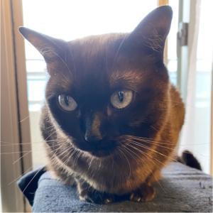 『とある日のトンちゃん』女子ですが髭は立派な方ですおはようございますニャン#猫...
