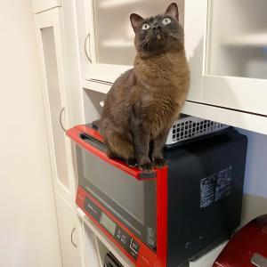 レンジの上に猫さんが…!