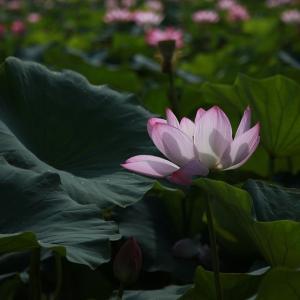 「世界で一つだけの花」になるとは、酒やめて執着心から解脱すること!?
