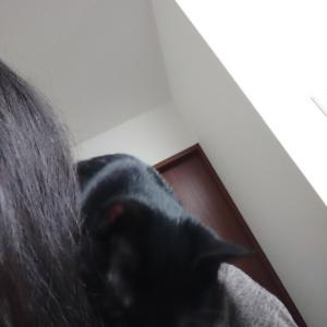 肩乗り猫は、ずっと肩乗り猫