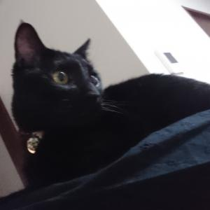 猫のパントマイム
