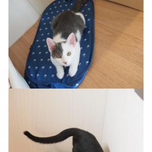 動物病院の保護猫