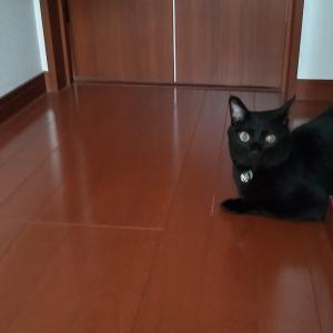 待ち猫なおさん