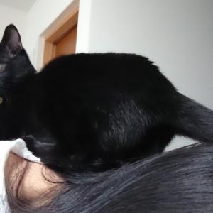 乗り猫が家にいるとこうなる(笑)