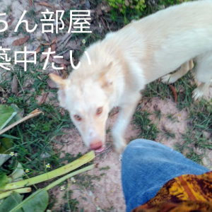 [Doggie life in the countryside of Thailand] is a state of emergency, I'm minimalist declaration and su-chan's room building