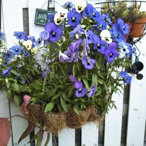 キッチンのミニリフォームと花の植え替え