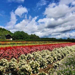 2泊3日の家族旅行で札幌市内観光&富良野・美瑛観光(レンタカー利用) レストランやショップも紹介