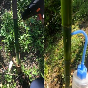 【北向き裏庭の庭づくり⑥】竹の除草剤を使った駆除方法まとめ~竹を根から枯らす処理方法をご紹介!~