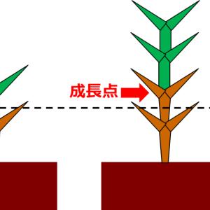 『芝』の育成~初夏に実施したサッチングとエアレーション作業