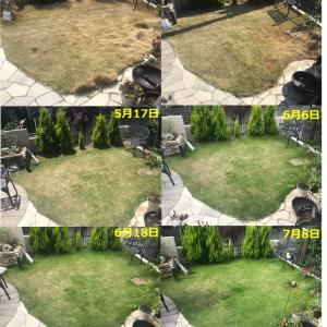 『芝』の成長を定点観測~「軸刈り」から復活までの3カ月半の成長記録