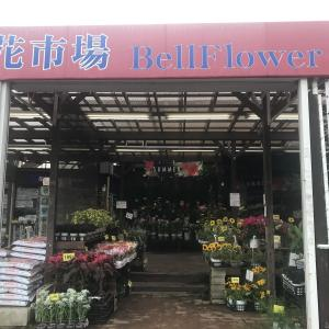 【神奈川の激安園芸店】『花市場ベルフラワー(BellFlower)』に訪問