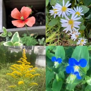 雑草には見えない植物の名前は?キレイな花を咲かせる雑草9選まとめ