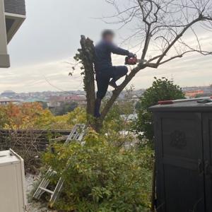 「カキ(柿)の木」の伐採をネットで見つけた業者に依頼~実体験(見積もりから伐採作業まで)をご紹介!