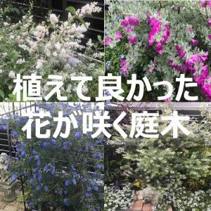 """【植えて良かった!】洋風・コンパクト(3m以下)で常緑・丈夫な""""おすすめ庭木""""まとめ"""