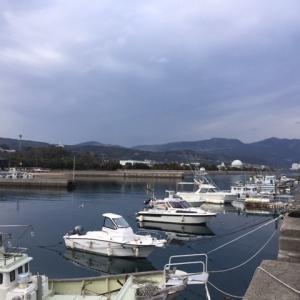 亀川漁港でのアジングで根魚!!