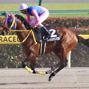 【今週のメイショウ馬の特別レース登録】スワンSにメイショウオーパスが登録