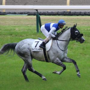 【馬場に苦労する馬が多数】エプソムC、マーメイドSのレース回顧