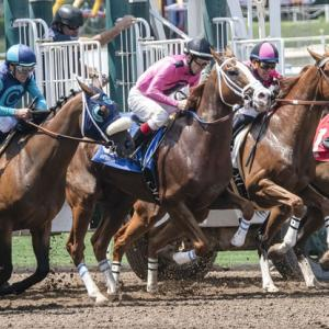 【プロキオンSのデータ分析】人気、ステップレース、斤量、血統など6項目から好走馬の傾向を探る