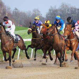 【エルムSのデータ分析】人気、年齢、種牡馬など6項目から好走馬の傾向を探る