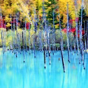 「青い池」と「白ひげの滝とブルーリバー」【北海道・美瑛町】
