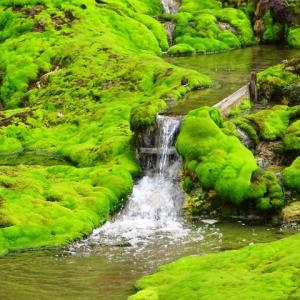 尻焼温泉とチャツボミゴケ公園「中之条ビエンナーレ2017 番外編」【群馬県】