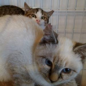 ティモシーとサラ
