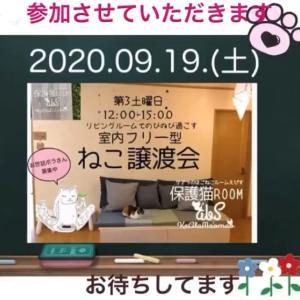 9/19譲渡会への参加猫(ご紹介)