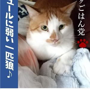 エイズキャリア猫たちのご紹介(里親募集!)