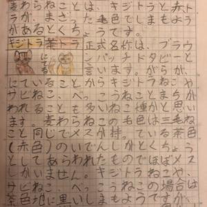 小学4年生の素敵な自由研究!