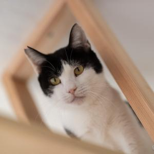 里親募集の猫たちをカメラマンさんに撮影して貰いました。(パート2)