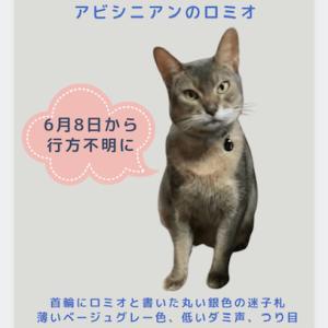 迷子猫を探しています(情報求む!)